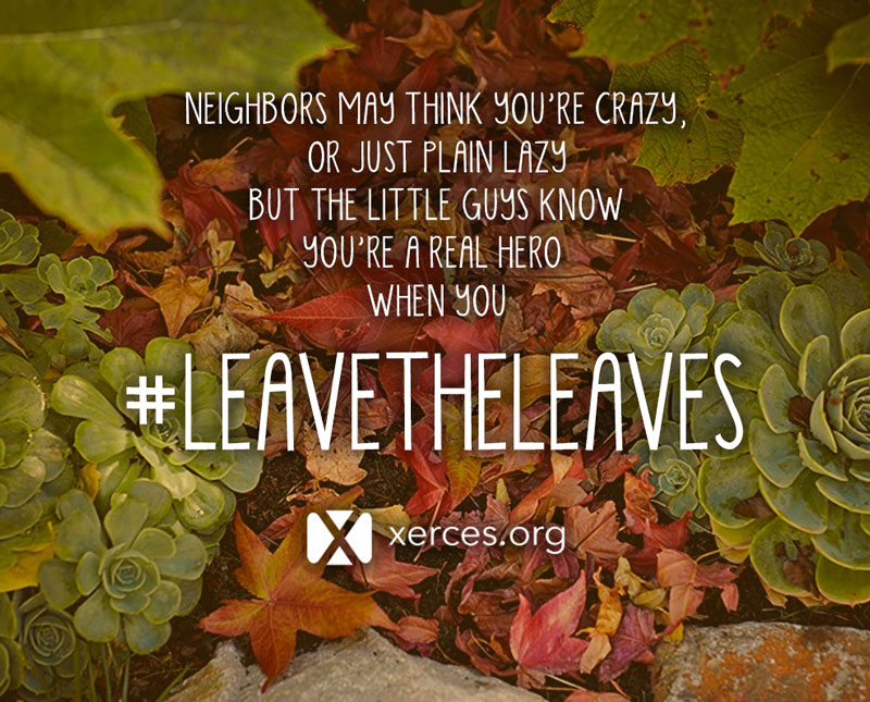 Xerces Society for Invertebrate Conservation Blog: Leave the Leaves! By Justin Wheeler on 6 October 2017